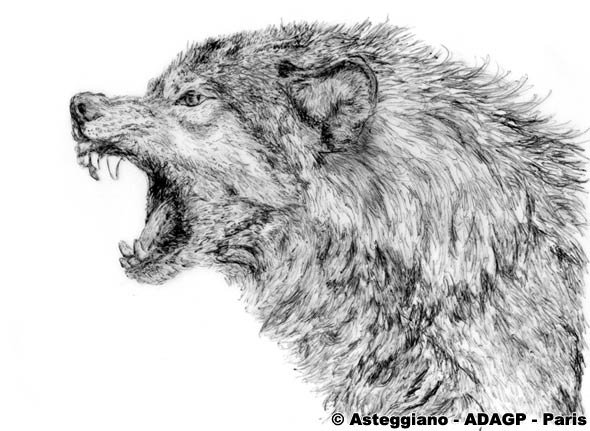 Asteggiano is a painter - Croquis animaux ...